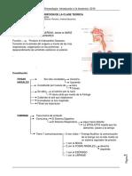 APARATO RESPIRATORIO- 2015.pdf