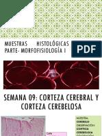 Muestras Histologicas 9-15