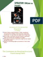 Accessory Respiratory Organ in Fish