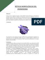 Características Morfológicas Del Cromosoma