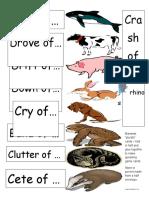 Science Mammal Plurals Card