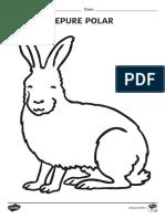 Animalele la poli - Fise pentru colorat.pdf