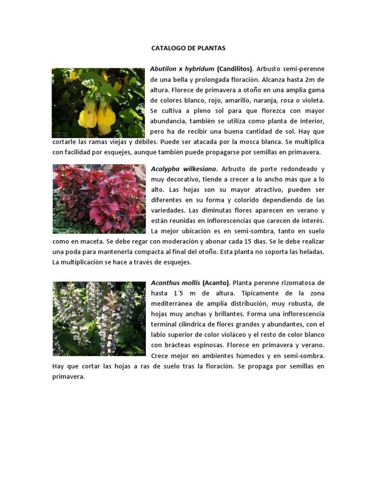 Catalogo de plantas for Nombres de los arboles de hoja perenne