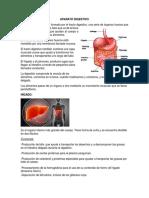 Estómago, Hígado y p.ancreas