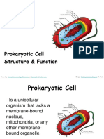 Prokaryotic Cell Structure Function Biology Lecture