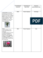 Bianca's Folder Types of Flowers