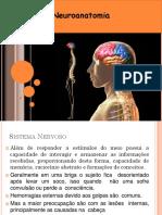 Aula Sistema Nervoso 2