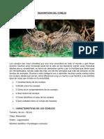 DESCRIPCION DEL CONEJO.docx