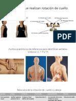 4.Musculos.rotacion.cuello