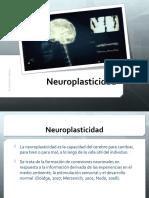 neurociencia-neuroplasticidad-170120060002