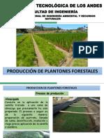 6. Procesos de Produccion de Plantones