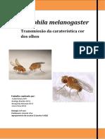 Relatório Final PDF Drosophila Melanogaster Nota - 19 Val