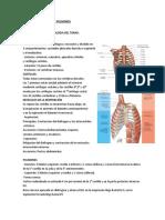 semiología torax y pulmones