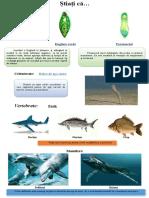 Locomoţia in mediul acvatic 1 (2).doc