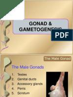 gonad & gametogenesis