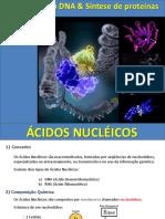 Aula de Acidos Nucleicos - Camila Xavier