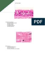 Histology Practice Practical