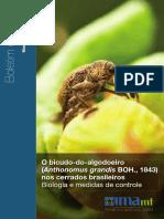 Boletim Bicudo.pdf