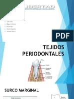 TEJIDOS PERIODONTALES