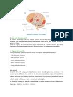 Sistemas sensoriales - los sentidos