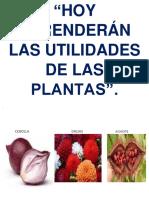Hoy Aprenderán Las Utilidades de Las Plantas