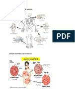 Gambar Sendi Dan Otot