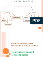 2.Compare and Contrast Process in Animals Autosaved (1)