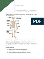 clasificacion de los huesos