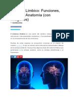 SISTEMA LIMBICO-FUNCIONES, PARTES Y ANATOMIA.docx