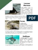 Aves de Galapagos