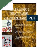 Presentacion de Vias Del Metabolismo Energetico
