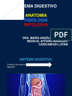 Sistema Digestivo Ppt