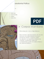 Neuroanatomia Prática - Corpos mamilares, núcleo supraquiasmático e infundíbulo