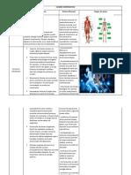 Cuadro Comparativo Sistema Muscular y Sistema Oseo