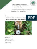 Proyecto de Plantaciones Forestales Vivi