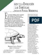 El Origen y La Evolución de Las Tortugas