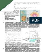 aparato-digestivo-cavidad-bucal-faringe-esofago-estomago-intestino-delgado-y-grueso-y-glandulas-anejas.docx