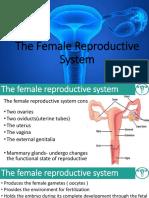 Female Repdn Ppt