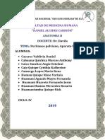 ANATOMIA - PELVIS - DAVILA.docx