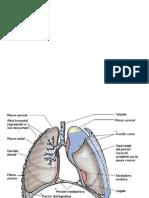 pliquido pleural expocision de patologia clinica.pptx