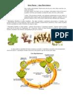 Reino Plantae I