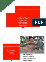 CACHAMA.pptx