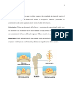 Adelanto actividad Mofosisiologia.docx