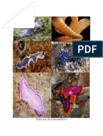 Documentoficha Tecnica de Platelmintos II Semestre