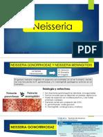 neisseria.pptx