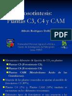 PLANTASC3-C4-CAM_2018.ppt