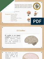 Cerebro-y-su-evolución.pptx