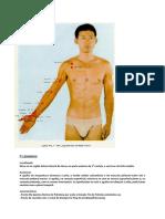 GOLA 1. MERIDIANO DO PULMÃO.pdf