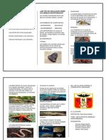 circulacion animales inv..docx