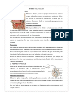 PARES CRANEALES - copia.docx
